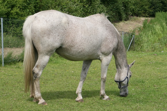 Zo'n grazend Piet-Bos-paard is een verademing vergeleken bij de onrust rond Langestraat Zuid...